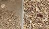 Gjenden njëmijë dhëmbë të njerëzve brenda murit të një ndërtese (Foto/Video)