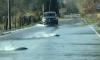 Shirat e rrëmbyeshëm bënë që lumi të dalë nga shtrati në Washington, salmonët notonin para syve të shoferëve (Video)