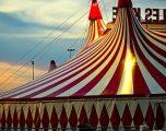 Devetë e ikura nga cirku, përfunduar në një qendër tregtare (Foto)