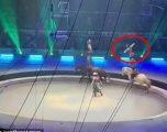 Gjatë shfaqjes në cirk, akrobati rus rrëzohet nga kali i cili më pas e shkel – shpëton me lëndime të lehta (Video, +16)