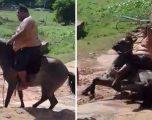 Është aq i plotë sa që e rrëzon kalin kur tenton ta kalërojë (Video)