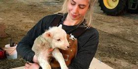 """""""Bareshat moderne"""" braktisën profesionet për të cilat studiuan, që të kujdesen për delet në periferi (Foto)"""