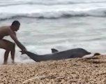 Delfini vazhdonte të dilte në breg edhe pas përpjekjeve të shumta për ta kthyer në breg (Video)