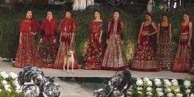 Pjesë e pasarelës së zhvilluar në park, u bë edhe një qen shumë miqësor me modelet (Video)