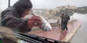 Peshqit mbushin rrugët e Maltës, kalimtarët sfidojnë dallgët gjigante për ti marrë (Video)