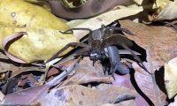 Beteja e ashpër me hardhucës dhe një merimange (Video)