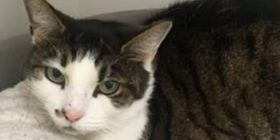Iku derisa po e dërgonin te veterineri, macja iu kthye në shtëpi pas dhjetë vitesh (Foto)