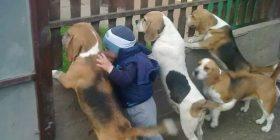 Imazhet që tregojnë afërsinë e fëmijëve të vegjël me kafshët shtëpiake (Foto)