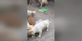 Këlyshi ndaloi së ngrëni, u sigurua që pak ushqim t'ia dërgoi edhe nënës (Video)