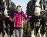 Nxënësja tetëvjeçare e kalon kohën e lirë, duke u kujdesur për kuajt me gjyshin e saj (Foto)