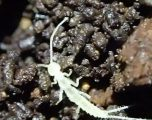 Specia e gjetur në një shpellë në Kanada, dyshohet se ka mbijetua që nga Epoka e Akullnajave (Video)