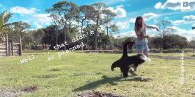 Vizitorja donte ta ushqente, mjellma i kundërvihej duke e ndjekur ta kafshonte (Video)