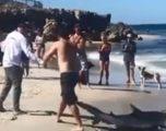 Zuri në grep një peshkaqen, me vështirësi e ktheu sërish në det (Video)