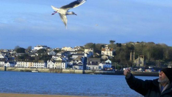 Pulëbardha fluturon çdo ditë për të vizituar burrin e moshuar, i cili ia shpëtoi jetën asaj (Foto)