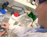 Shkencëtarët zbulojnë një 'xham' që e shkatërron bakterin E.coli