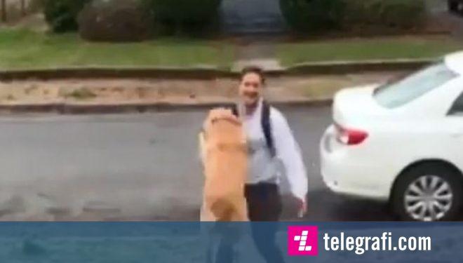 Mikpritja e përditshme që një qen i madh ia bën pronarit (Video)