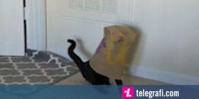 Ngeci brenda qeses së ushqimit, macja u largua ngadalë duke u përpjekur të ikte (Video)