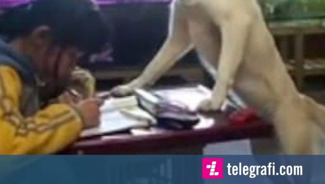 Nxënësja mbikëqyret nga qeni shtëpiak, përfundon detyrat pa e prekur telefonin (Video)