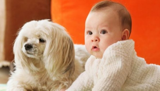 Qentë mbrojnë foshnjat nga infeksionet