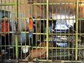 Maqedonia, rekord në Evropë për burgje të stërmbushura