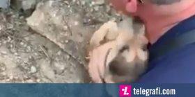 Qeni nuk ndaloi së ledhatuari zjarrfikësin nga i cili u shpëtua (Video)