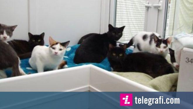 Shpëtohen 47 mace që jetonin në kushte shumë të vështira  në shtëpinë e një pensionisteje (Foto)