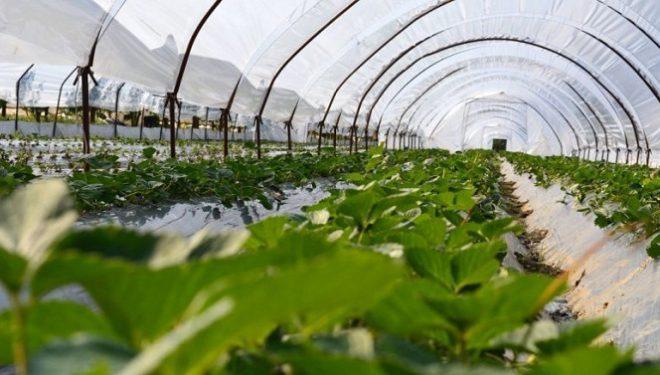 Rriten kapacitetet prodhuese vendore, por edhe çmimet