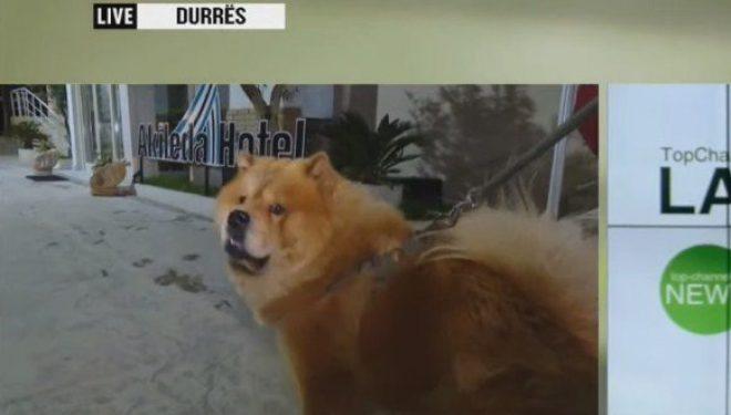 Qeni u shpëton jetën/ Nuk i la që të flinin natën e tërmetit duke u tërhequr batanijen (Foto)