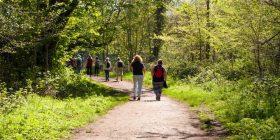 Kaq orë ecje në javë zvogëlojnë rrezikun e vdekjes