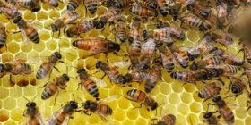 """Të """"gërditshme"""", por nëse zhduken këto tre lloje të insekteve do të krijohet kaos ekologjik"""