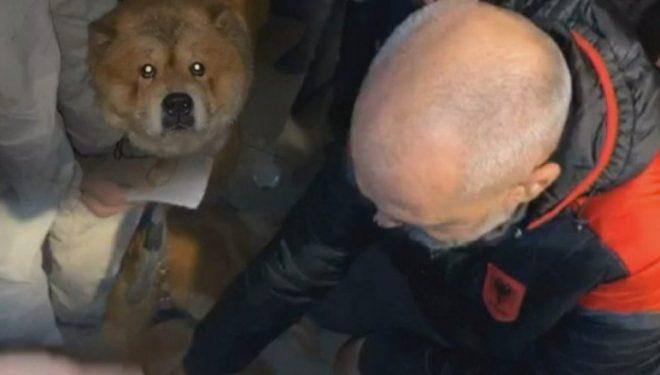 Qeni u shpëtoi jetën, por nuk i pranojnë në hotel me të, Rama i dërgon vetë në hotelin tjetër