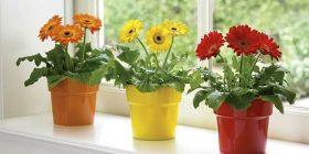 Vendet në shtëpi ku nuk duhet t'i mbani lulet gjatë dimrit