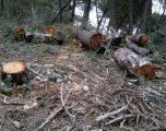 Kapen prerësit ilegalë të pyjeve, konfiskohen tetë mjete transporti në Ferizaj