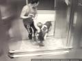 Qeni sulmon vogëlushin brenda ashensorit