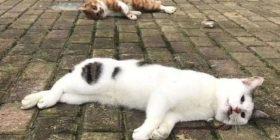 Rrugët e Kinës mbushen me qen e mace të hedhura nga ballkoni pas lajmeve se po përhapin koronavirusin