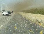 Pushtojnë Lindjen e Mesme, karkalecat bllokojnë qarkullimin e automjeteve