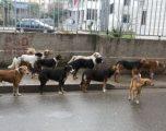 Projekti për menaxhimin dhe kontrolli i qenve endacakë në Kosovë, ka nisur
