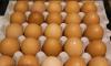 Shfaqja e sëmundjes të murtajës së shpezëve, Kosova ndalon përkohësisht importin e vezëve nga Maqedonia e Veriut