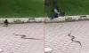 Në mes të Prishtinës, duel i pazakontë!