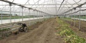 Dëmet nga moti, ndahen mbi 1.8 milionë euro për kompensimin e bujqve