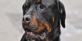Mallkon qenin e tij – gjykata e shpall fajtor