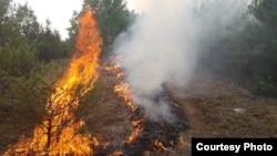 Maqedoni e Veriut: hapësira pyjore të përfshira nga zjarri