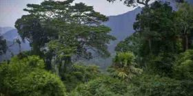 CMG-ja: Kina jep kontribut për mbrojtjen e biodiversitetit në botë