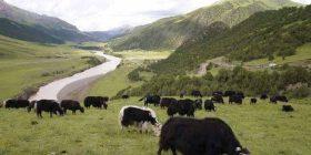 Mbrojtja e  biodiversitetit, përgjegjësi për qytetërimin njerëzor